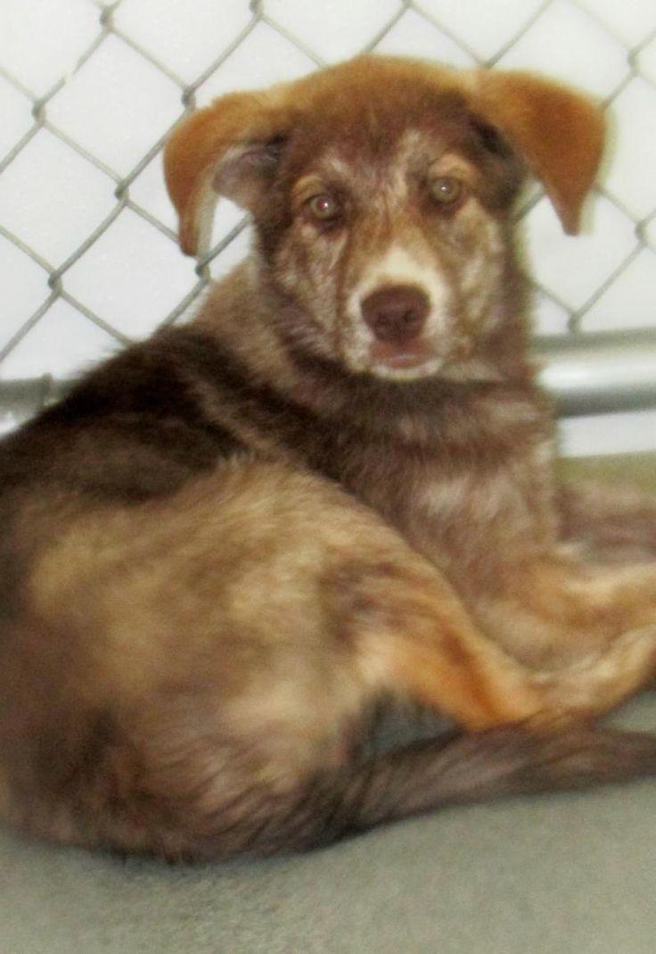 Adopt Paisley on Catahoula mix, Animals, Animal shelter
