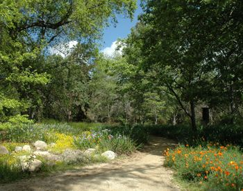 The Rancho Santa Ana Botanic Garden is a zen-like place. Although meditative group walks have ended, you can still do tai chi and yoga in the garden on Wednesdays and Thursdays. Go here for more info: http://www.rsabg.org/events-upcoming/585-yoga-in-the-garden