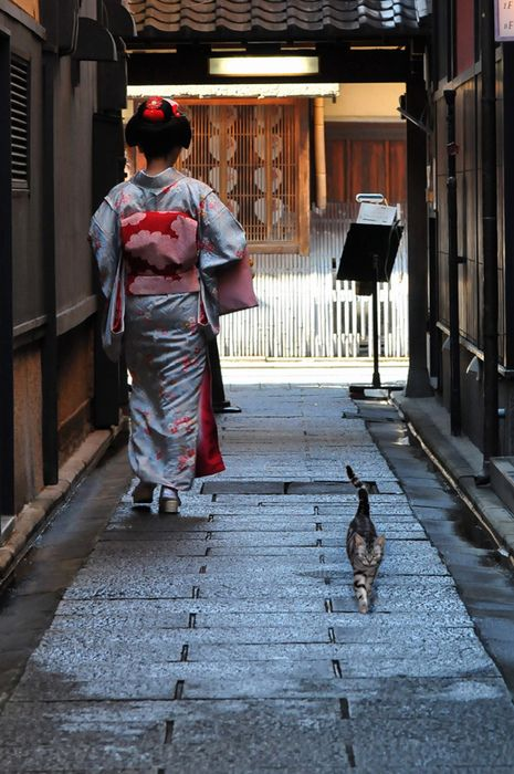 Maiko and a street cat in Kyoto, Japan