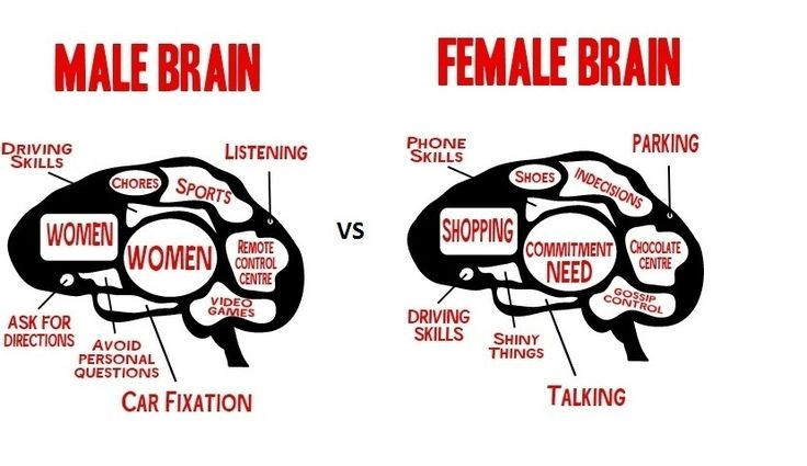 Study: The Brains Of Men And Women Are Different...With A ...