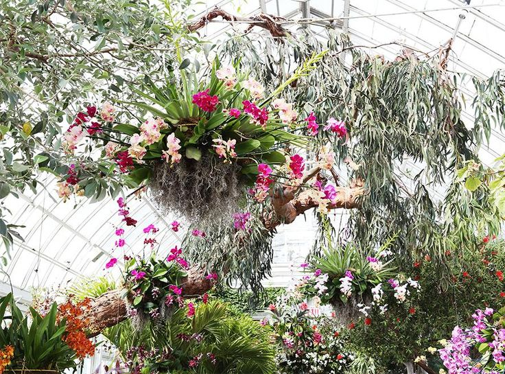 38 best orchid obsession images on pinterest exotic flowers feel the flower power go inside the orchid show at the new york botanical garden mozeypictures Gallery