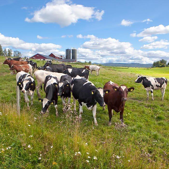 Krämig soppa med räkor och löjrom - Norrmejerier