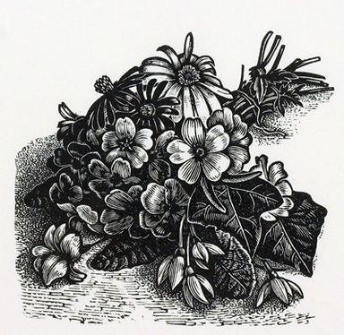 Howard Phipps. Spring Flowers. (wood engraving)