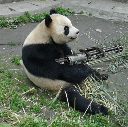 holycrap the pandas got a rail gun and a pan on his head panda guns and apocalypse survival