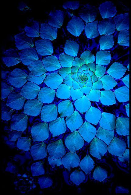 Cobalt glow.
