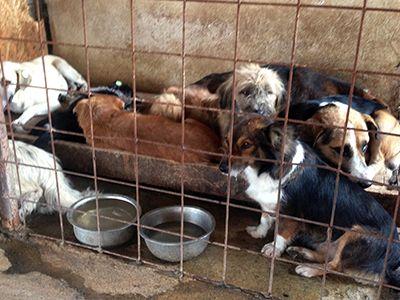 Ihre Unterschrift gegen das Töten von heimatlosen Hunde in Rumänien