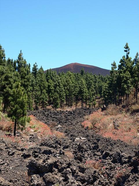 Lava field through pines, south west Tenerife by Walk Tenerife, via Flickr