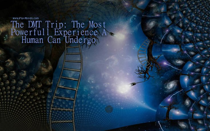 The DMT Trip: The Most Powerfull Experience A Human Can Undergo - @psyminds17