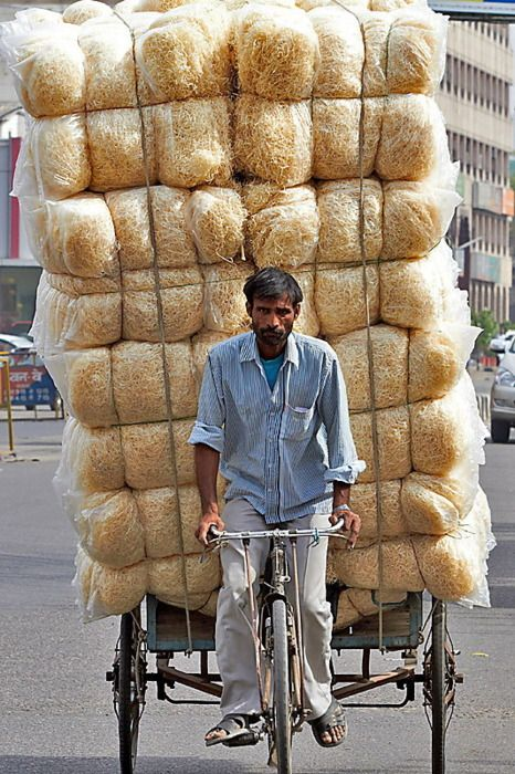 transporting the cooler shutter grass   Rajasthan   India