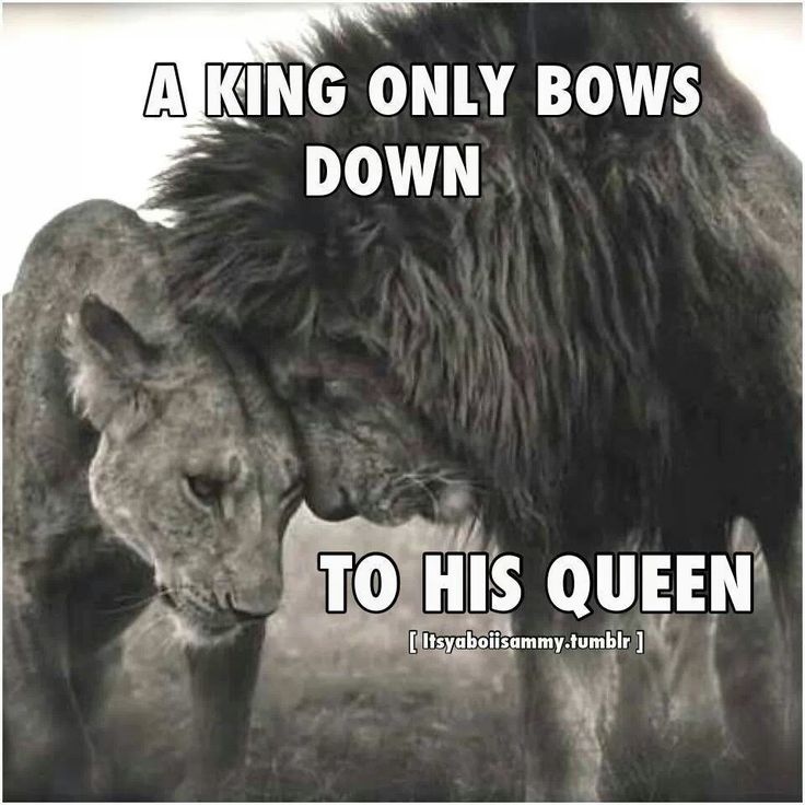 Lion King Love Quotes: Aww A Good Saying I Was Told Before Is ( A King Is Nothing