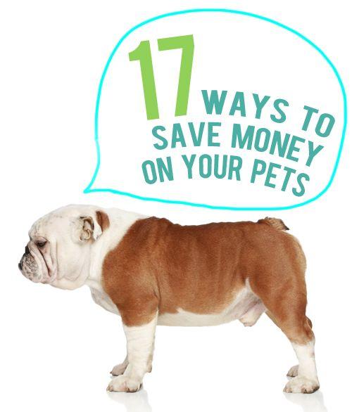 17 Ways to Save Money on Pet Expenses
