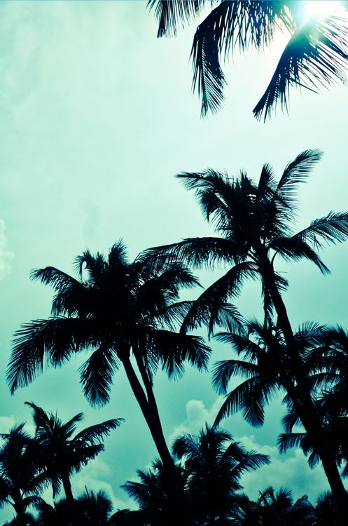 Stand tall like a bunch of palm trees.