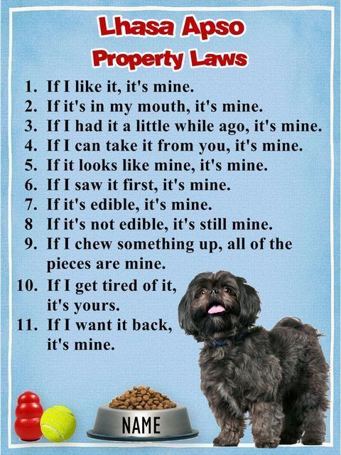 Lhasa Apso Property Laws - how true