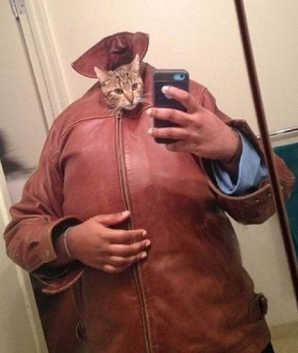 Big Cool Cat with a Small Head Selfie ---- jokes funny pictures walmart fail humor