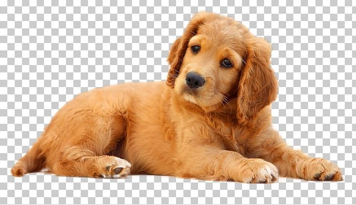 Dogs Png Dogs Png Photoshop Rendering Png Images