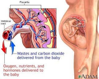 The Well-Rounded Mama: Placenta Accreta, Part One: What Is Accreta?