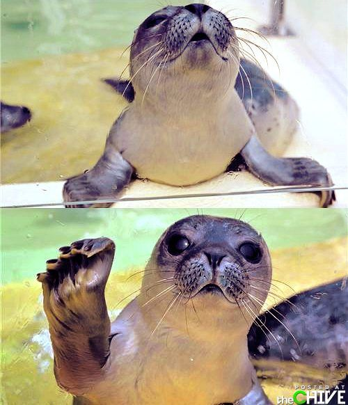 too sweet: Awww, Critter, Pet, Sea Lion, Creatures, Baby Animal, Smile, Adorable Animal, Baby Seals