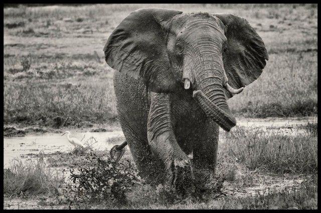Chris Martin Wildlife Photography | great post with wildlife photography tips