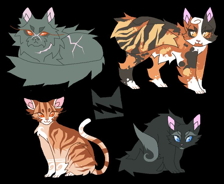 What Warrior Medicane Cat Are You