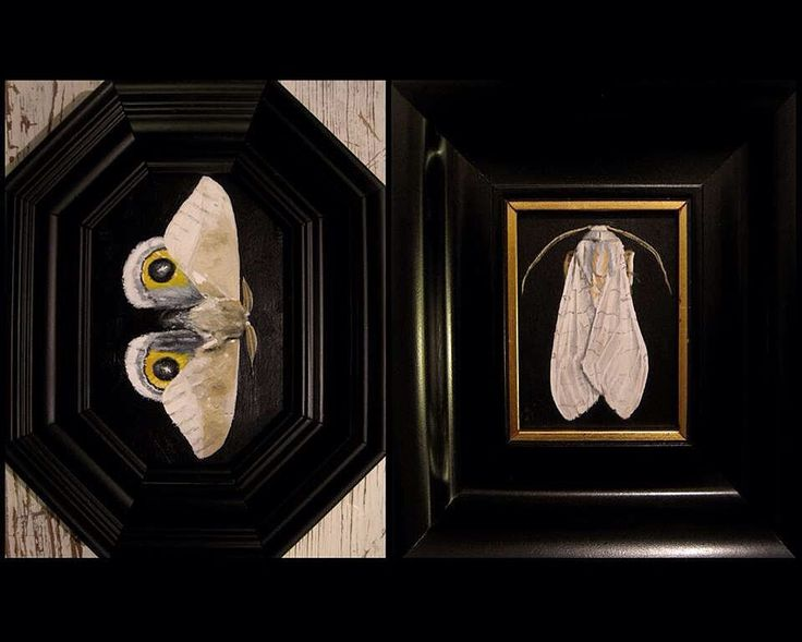 Mariposas nocturnas en @lalatadesardinas  #gabineteinsecta 2016 #laortopediadelmanco #lalatadesardinas #moth #butterfly #polilla #mariposanocturna #dark #acrilico #acrylic #liquitex #entomology #entomologia #heterocera #halysidotatessellaris #art #malasaña #condeduque #arteenmadrid #cuadrosdebolsillo #realismo by laortopediadelmanco