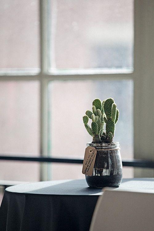 tiny little cactus