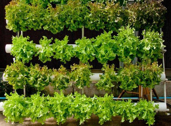 Vertical Gardening Indoors