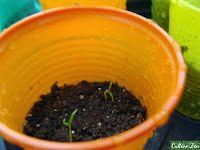 Blog sobre cultivo de hortaliças em pequenos quintais ou apartamento.
