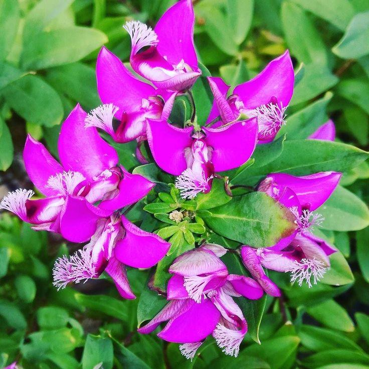 Piękne kwiaty - ciekawe jak się nazywają? Kto wie?  #kwiaty #lato #dianapozytywnie