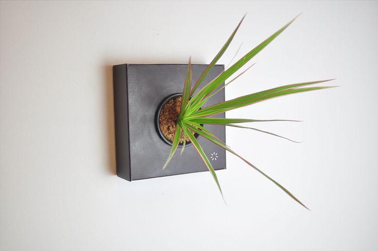 https://flowerbox.com.tr/urun/197/k-pot-tek