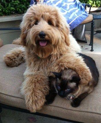 Ridgeline Dog Breed Puppy