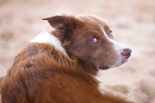 Three steps to treat eye discharge without antibiotics Eye discharge is one of the most common problems in dogs. Whenever I...