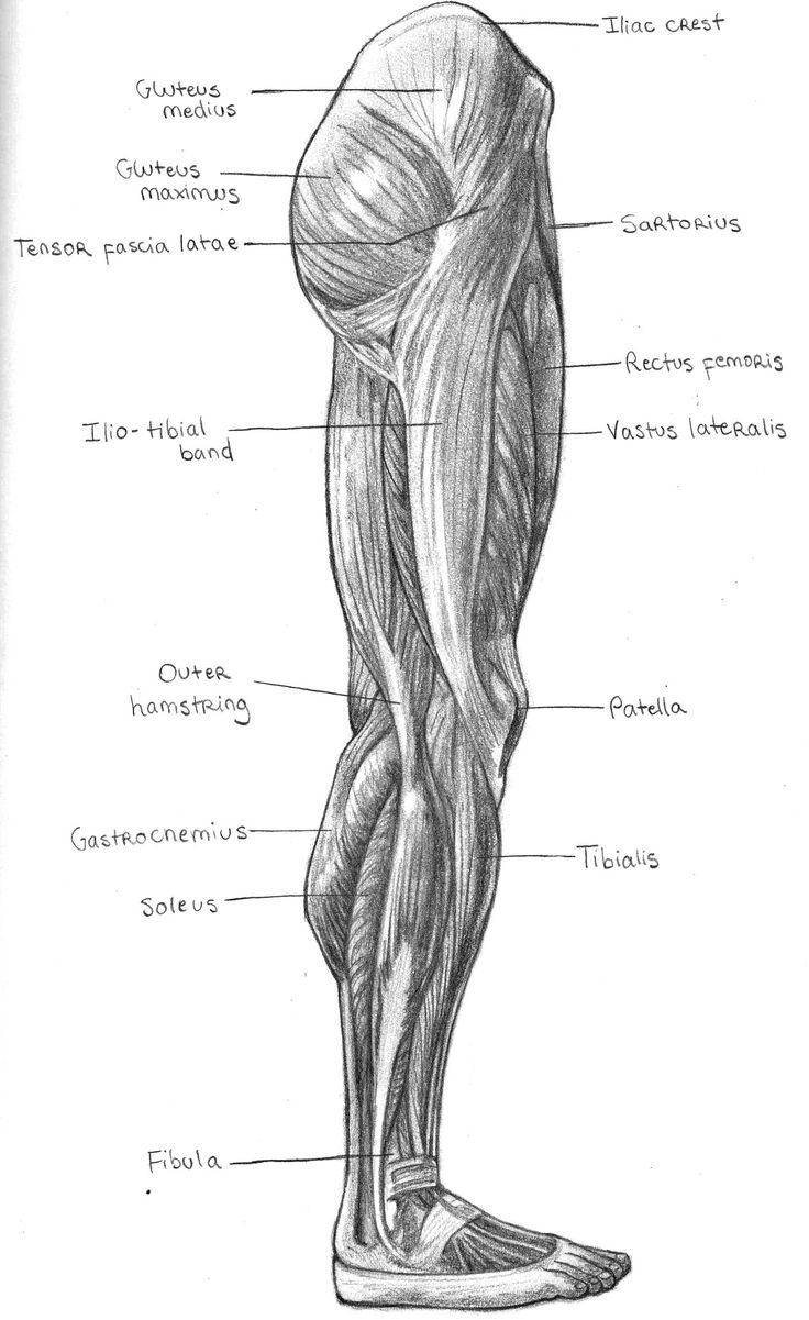 The 198 Best Muscles Images On Pinterest Anatomy Reference