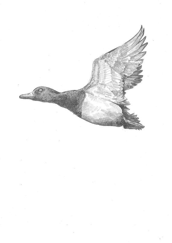 how to draw a duck flying