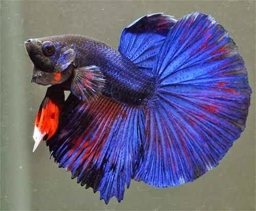 Best 25 betta food ideas on pinterest small fish tanks for Betta fish pellets