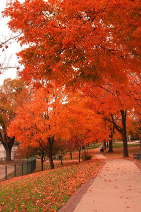 Beautiful Fall Colors in Lake Geneva, Wisconsin