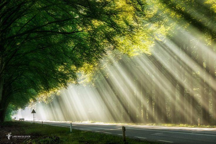 Cortina de lumină