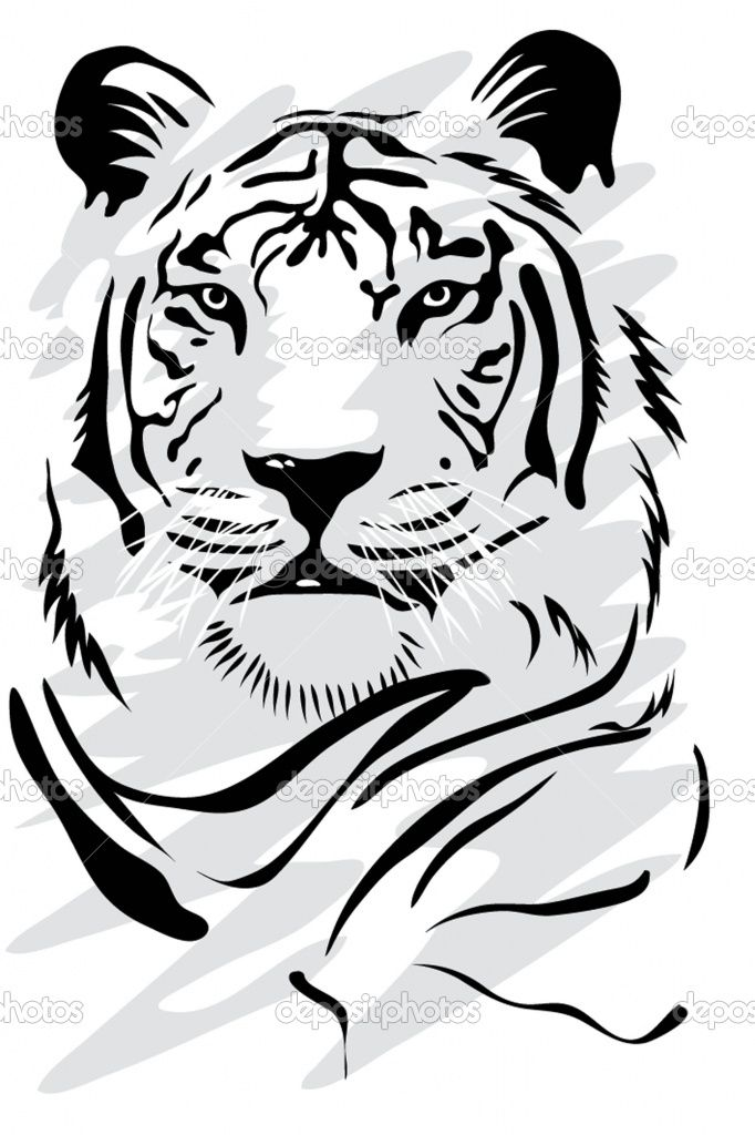 White Tiger Face Drawing