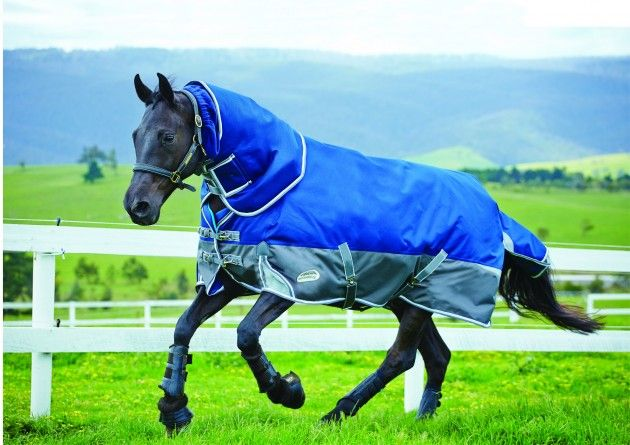 8 Of The Best Heavyweight Turnout Rugs Horse