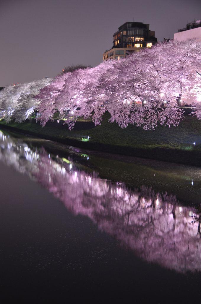 Chidoriga-fuchi Night Sakura 千鳥ヶ淵 ↔ itt végighajókázni #ChidorigafuchiInfók: ~ a hajókázás kb 2100 Ft-ba kerül, aztán ott esetleg piknikezhetnék a folyó közelében, tradíciós japán kajákkal relaxálnék a virágzó cseresznyefák alatt *3* 5000Ft-ot tuti elköltenék.