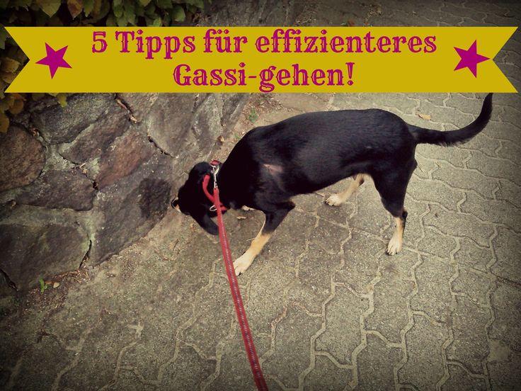 5 Tipps für effizienteres Gassi-gehen