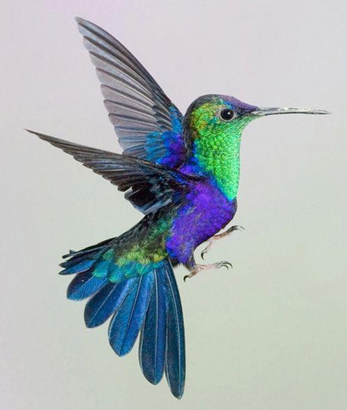 les 25 meilleures id es de la cat gorie colibri sur pinterest colibris tatouage colibri et. Black Bedroom Furniture Sets. Home Design Ideas