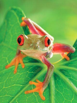 Résultats Google Recherche d'images correspondant à http://www.grenouille.info/images/petite-grenouille-colore.jpg