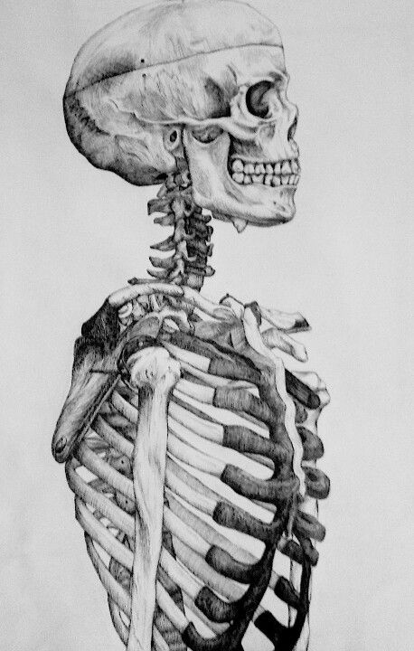 best 25+ skeleton drawings ideas on pinterest | skeleton, human, Skeleton