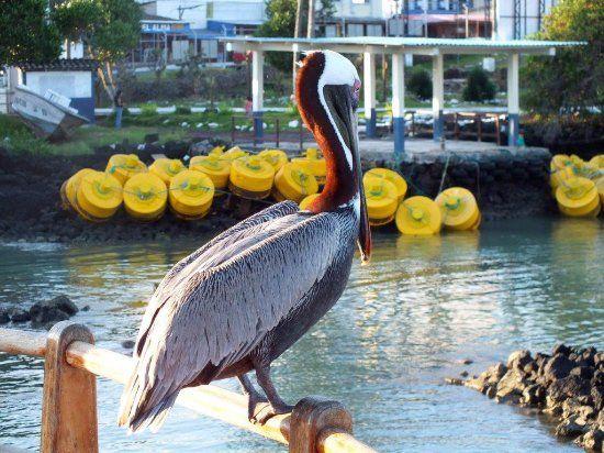 pino l -Galapagos - Recensioni dell'utente - TripAdvisor