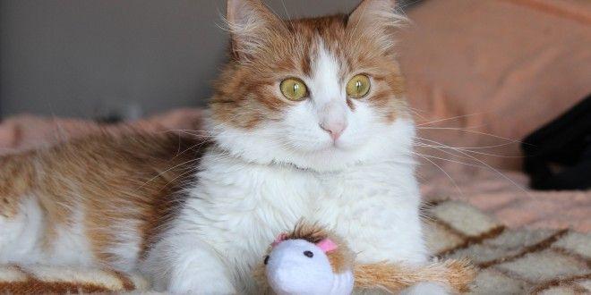 Какие документы нужны для перевозки кота