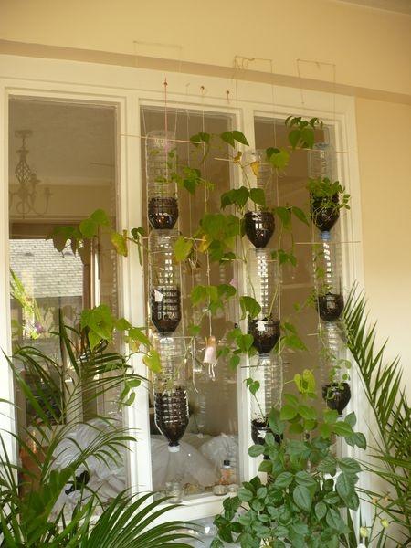 Growing A Garden Indoors 17 best growing food indoors images on pinterest gardening indoor plastic bottles as planters workwithnaturefo