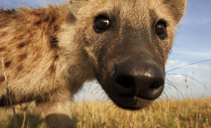 Unique Photos of African Wildlife Through Hidden Spy Cams - My Modern Metropolis