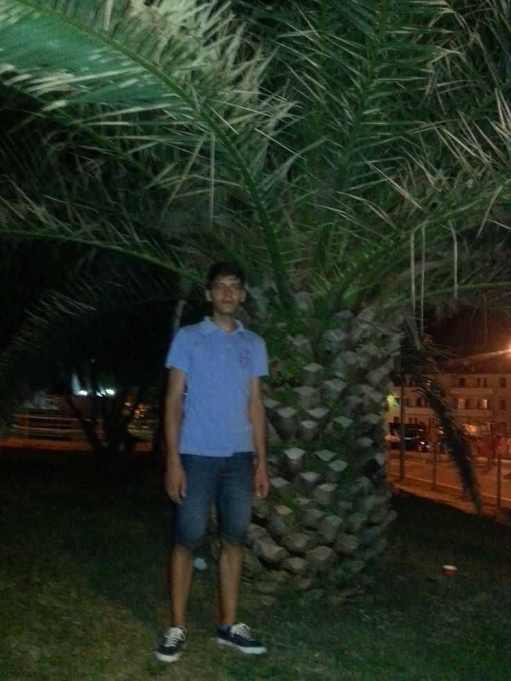 beatiful giant palmtree