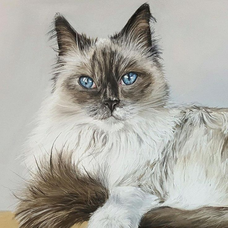 """""""Mi piace"""": 15, commenti: 2 - Sarah King (@sarah_king_art) su Instagram: """"Busy busy very limited space left now for Xmas... Www.sarah-king-art.co.uk #artist #petportraits…"""""""