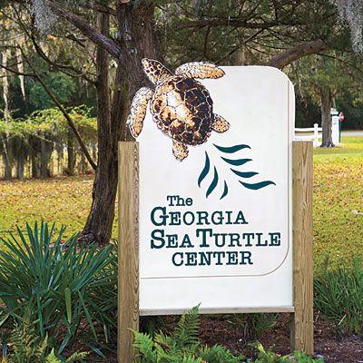 Georgia Sea Turtle Center - Five Reasons To Visit Jekyll Island - Southern Living